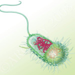 Prokaryotic Cell , 7 Prokaryotic Cell Pictures In Cell Category