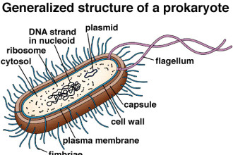 Prokaryotic Cell Structure in Skeleton