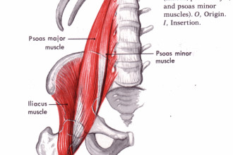 Psoas And Iliopsoas Stretching , 7 Psoas Muscle Back Pain In Muscles Category