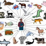 Rain Forest Food Pyramid , 7 Diagrams Of Rainforest Animals Food Chain In Animal Category