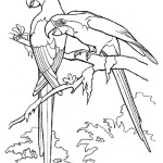 RainForest Birds Coloring Pages , 7 Rainforest Animals Coloring Pages In Animal Category