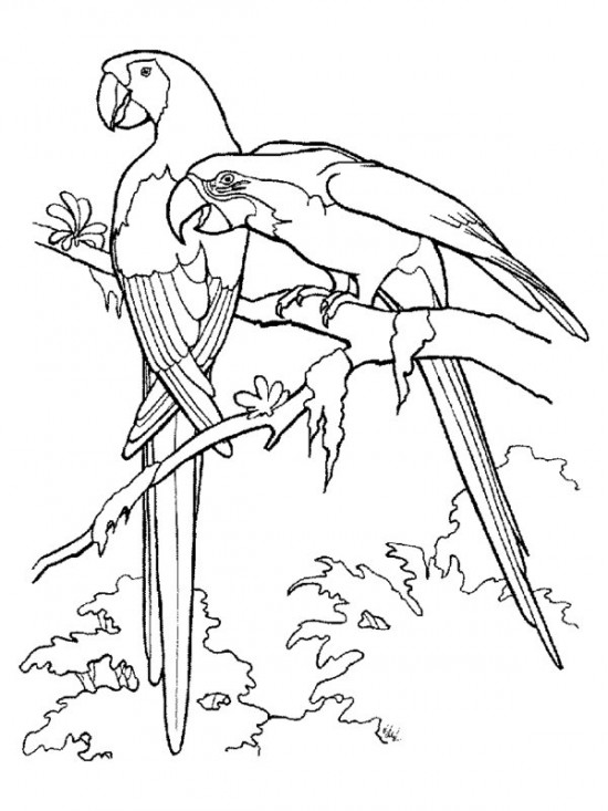 Rainforest Birds Coloring Pages | 733x550