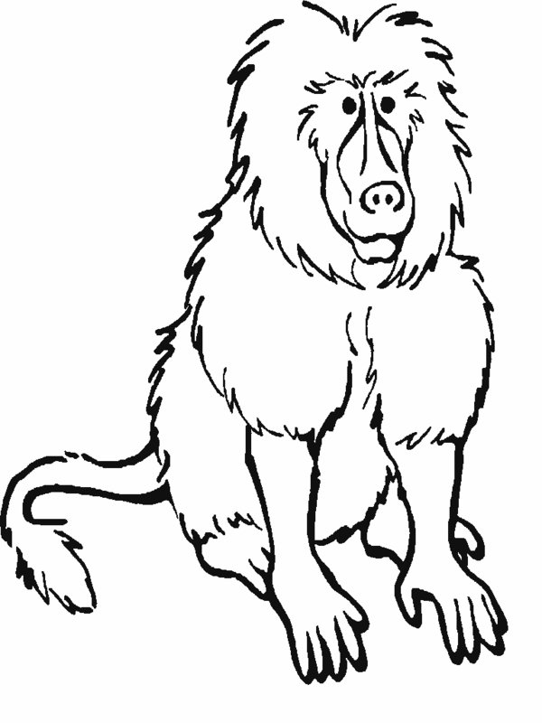 RainForest Mammals Coloring Pages