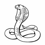 RainForest Snakes ColoringPages Picture , 7 Rainforest Animals Coloring Pages In Animal Category