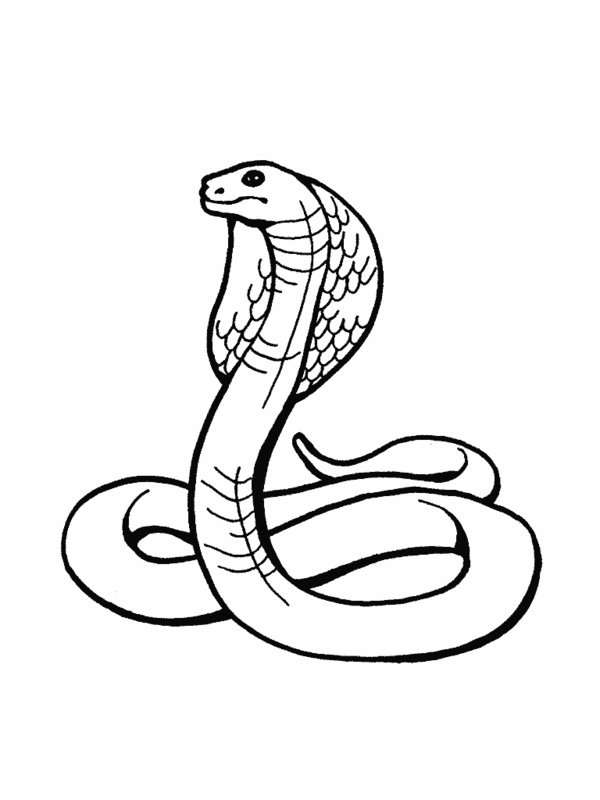 RainForest Snakes ColoringPages Picture
