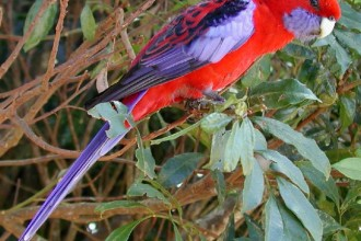 Rainforest Birds Pictures 2 in Dog