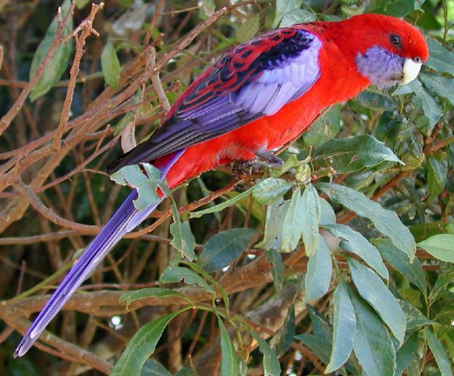 Birds , 6 Rainforest Birds Pictures : Rainforest Birds Pictures 2