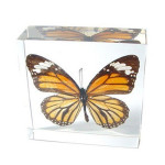 Real Monarch Butterfly Paperweight , 8 Monarch Butterfly Gift Items In Butterfly Category