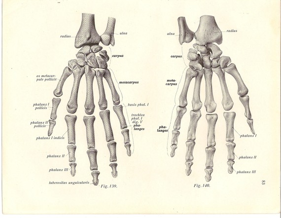 Skeleton Hands Anatomy 4 Human Skeleton Hand Diagrams Biological