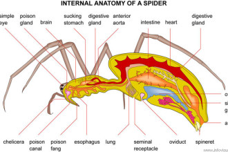 Spider Anatomy 2 in Environment