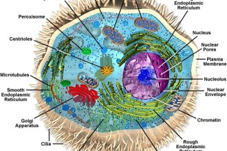 Structures of Eukaryotic Cells in Butterfly