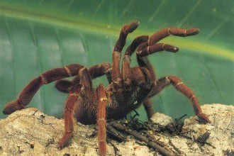 Tarantulas Fun Spider , 7 Tarantula Spider Images In Spider Category