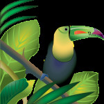 Toucan in Rainforest color , 7 Rainforest Animals Clipart In Animal Category