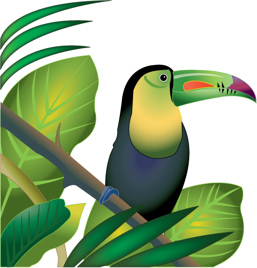Toucan in Rainforest color