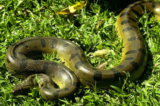 Tropical Rain Forest Reptiles in Environment