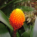 Tropical Rainforest Plants , 8 Pictures Of Tropical Rainforest Pictures Of Plants In Plants Category