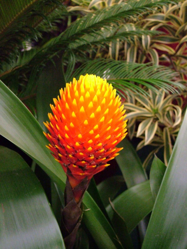 Plants , 8 Pictures Of Tropical Rainforest Pictures Of Plants : Tropical Rainforest Plants