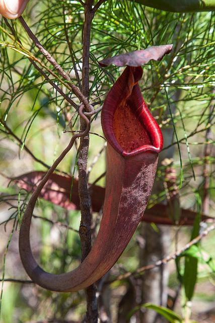 Tropical rainforest plants pictures : Biological Science ...