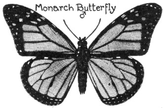 A Monarch Butterfly , 10 Monarch Butterfly Clip Art In Butterfly Category