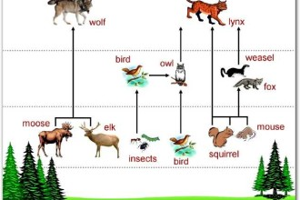 Animal Food Chain Pictures , 7 Diagrams Of Rainforest Animals Food Chain In Animal Category
