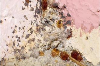 bed bug in Brain