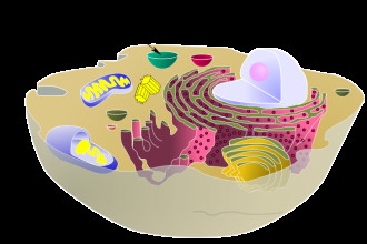 biological animal cell vacuole in Cell