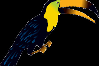 Bird Rainforest Clipart , 7 Rainforest Animals Clipart In Animal Category
