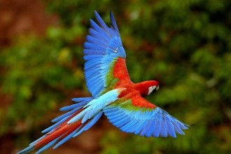 Bird Amazon Endangered Species , 7 Endangered Animals In The Amazon Rainforest In Animal Category
