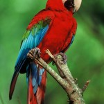 tropical rainforest bird.jpg , 6 Kind Of Animals In The Tropical Rainforest In Animal Category