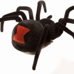 black widow spider facts for kids pic 3 , 6 Black Widow Spider Facts For Kids In Spider Category