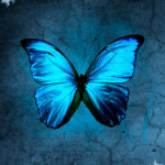 blue morpho butterfly images , 6 Blue Morpho Butterfly Wallpapers In Butterfly Category