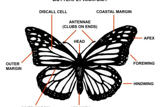 butterfly anatomy in Skeleton