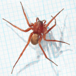 common house spider , 10 Brown House Spider In Spider Category