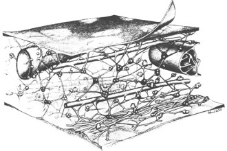 Cytoskeleton Images , 3 Cytoskeleton In Animal Cell In Cell Category
