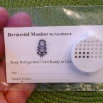 dermestid monitor for carpet beetles , 3 Removing Carpet Beetles Tips In Beetles Category