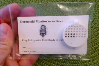 dermestid monitor for carpet beetles in Dog