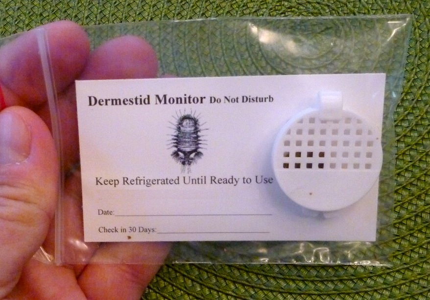 dermestid monitor for carpet beetles