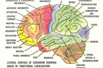 Diagram Of The Human Brain Parts 6 , 7 Diagram Of The Human Brain In Brain Category