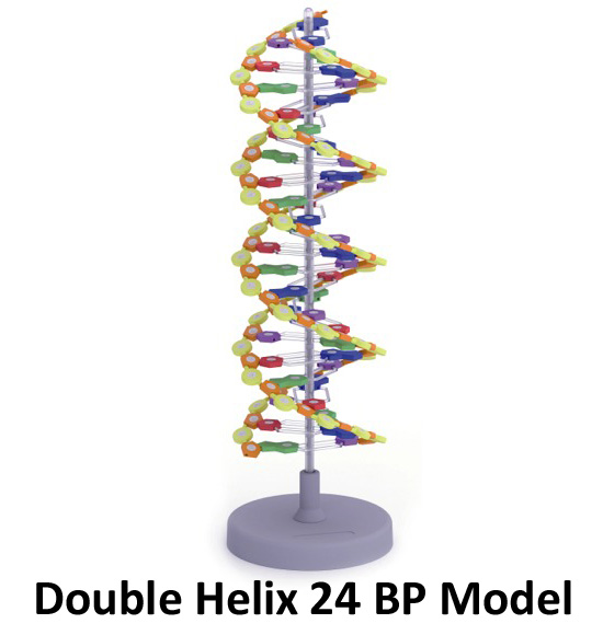 double helix dna project
