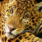 endangered animals in the amazon rainforest , 7 Endangered Animals In The Amazon Rainforest In Animal Category