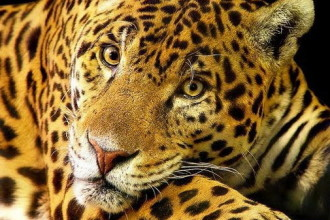 endangered animals in the amazon rainforest in Environment