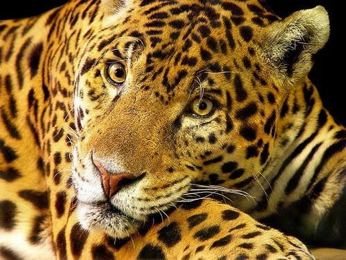 endangered animals in the amazon rainforest