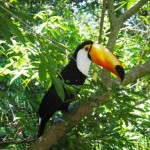 endangered animals in the rainforest , 7 Endangered Animals In The Amazon Rainforest In Animal Category