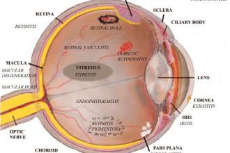 Eye Anatomy Worksheet , 6 Human Eyes Anatomy Worksheet In Organ Category