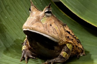 Frog On The Rainforest , 6 Tropical Rainforest Animal Facts In Animal Category