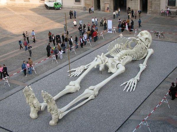 Skeleton , 5 Giant Human Skeletons Photos : Giant Human Skeleton Image