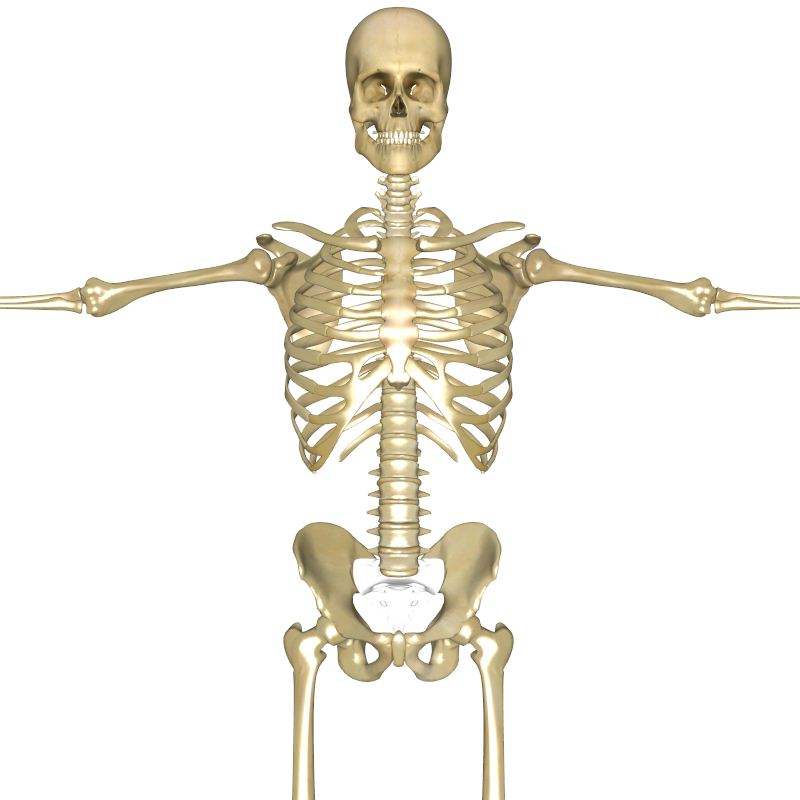 Human Skeleton 3d Pictures 3 Human Skeleton 3d Biological