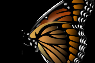 Monarch Butterfly Clipart , 10 Monarch Butterfly Clip Art In Butterfly Category
