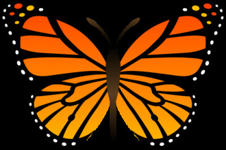 monarch butterfly vector in Skeleton