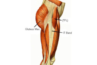 Muscles Lateral Side Thigh , 7 Pictures Muscles Back Of Thigh In Muscles Category